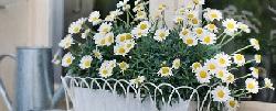 Garden irrigation: choose the best variant