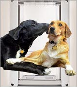An electronic dog door or automatic dog door both have their limitations, other doggy doors have special features that you'll love..